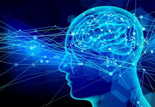 脳とネットワーク